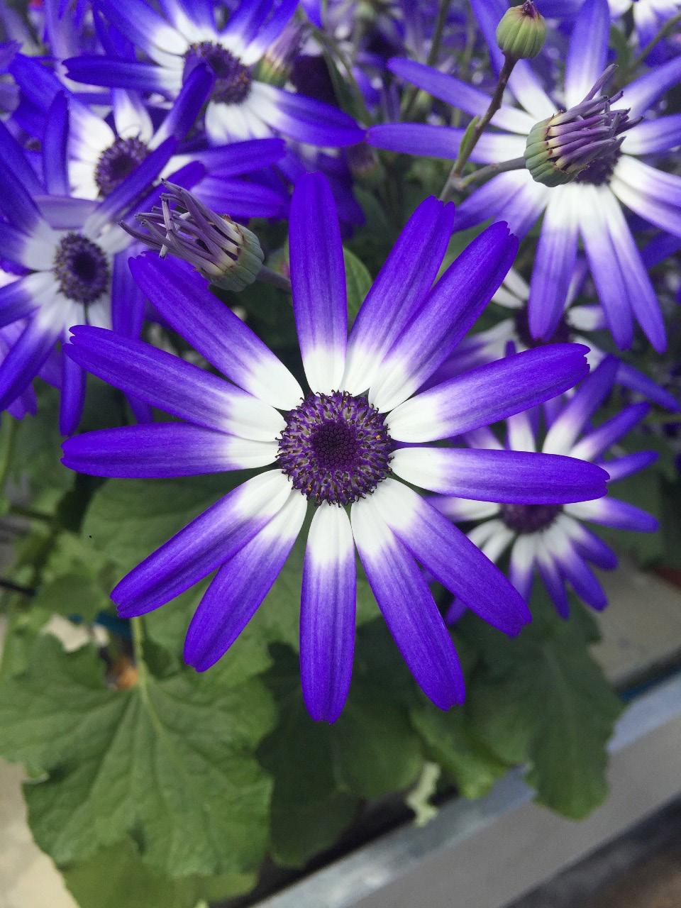 Page 32 of Availability of Senetti®