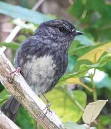 Page 20 of Naturally West: The toutouwai explores life beyond the Ark