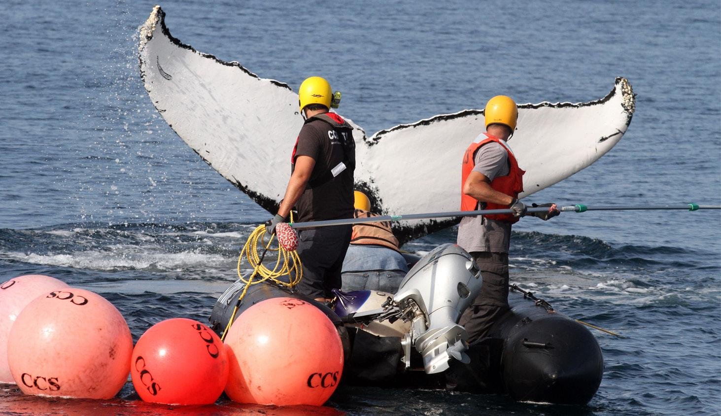 Page 38 of What do Atlantic Turtles, Pacific Whales and Pilots have in Common?