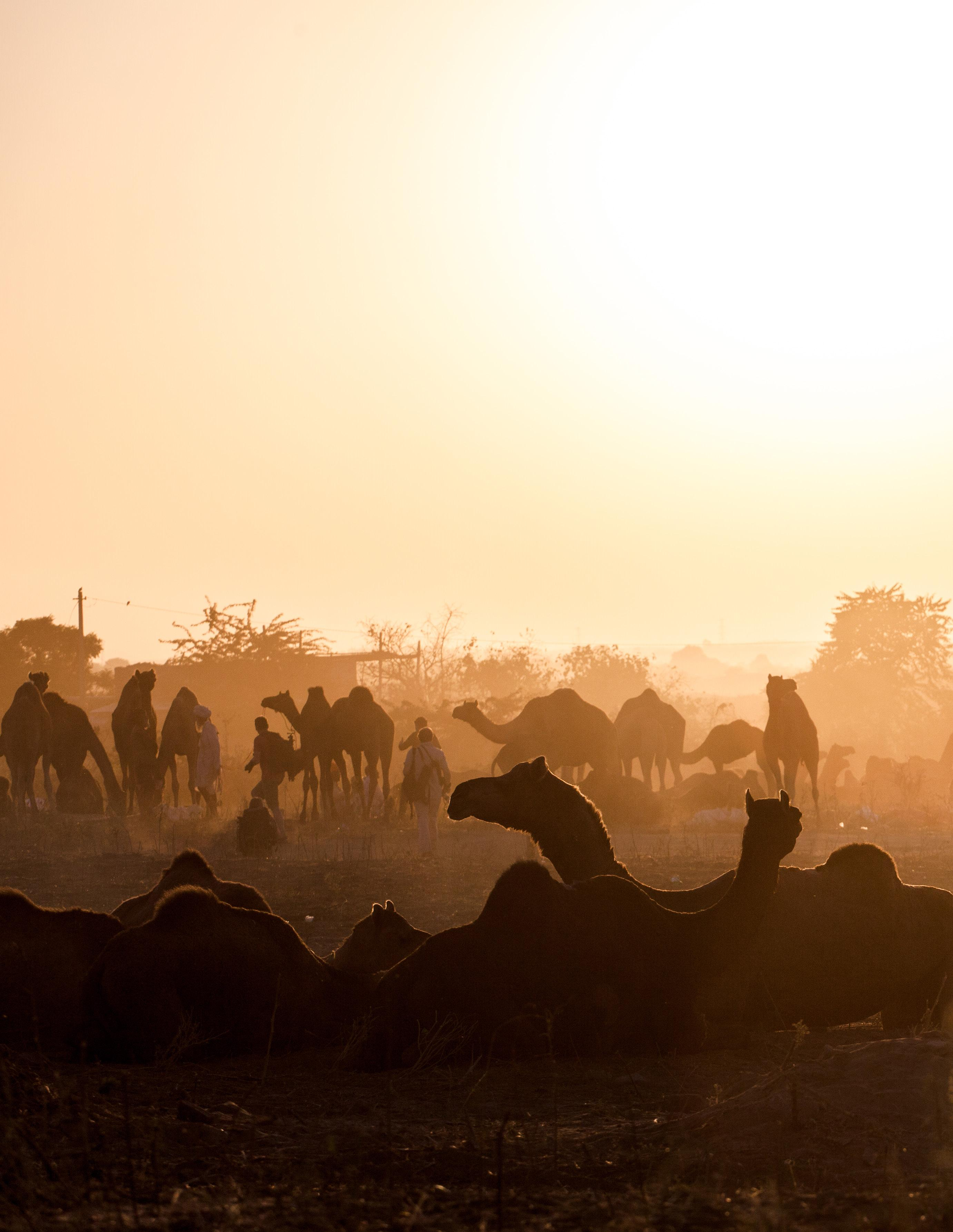 Page 8 of Photographer's Guide to the Pushkar Camel Fair