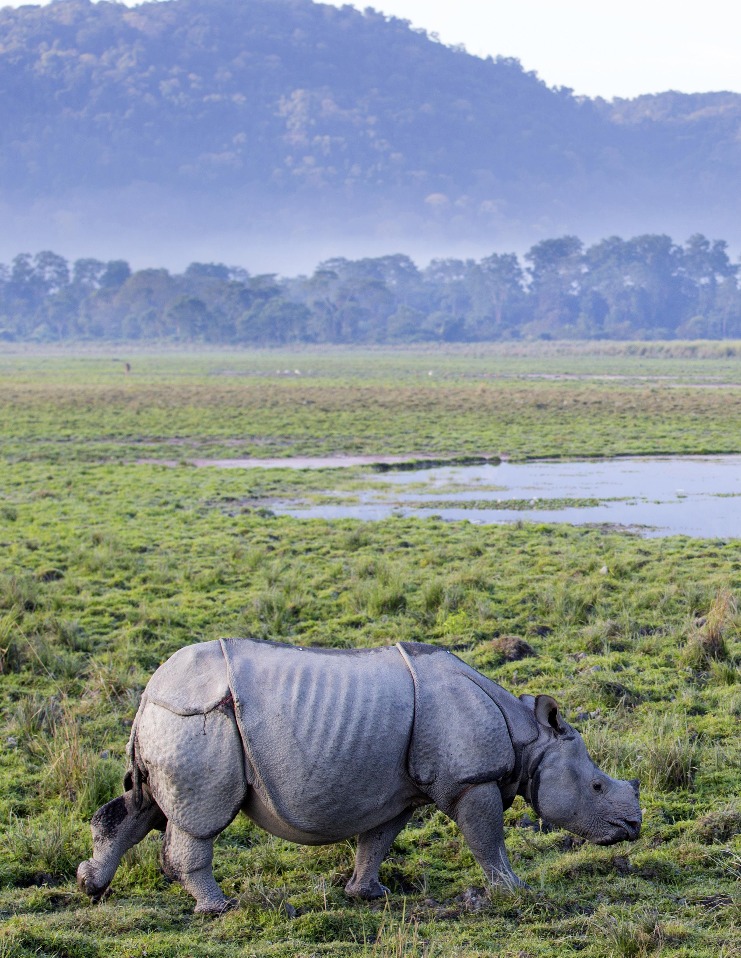Page 44 of Assam: The India Nature Destination You've Been Missing