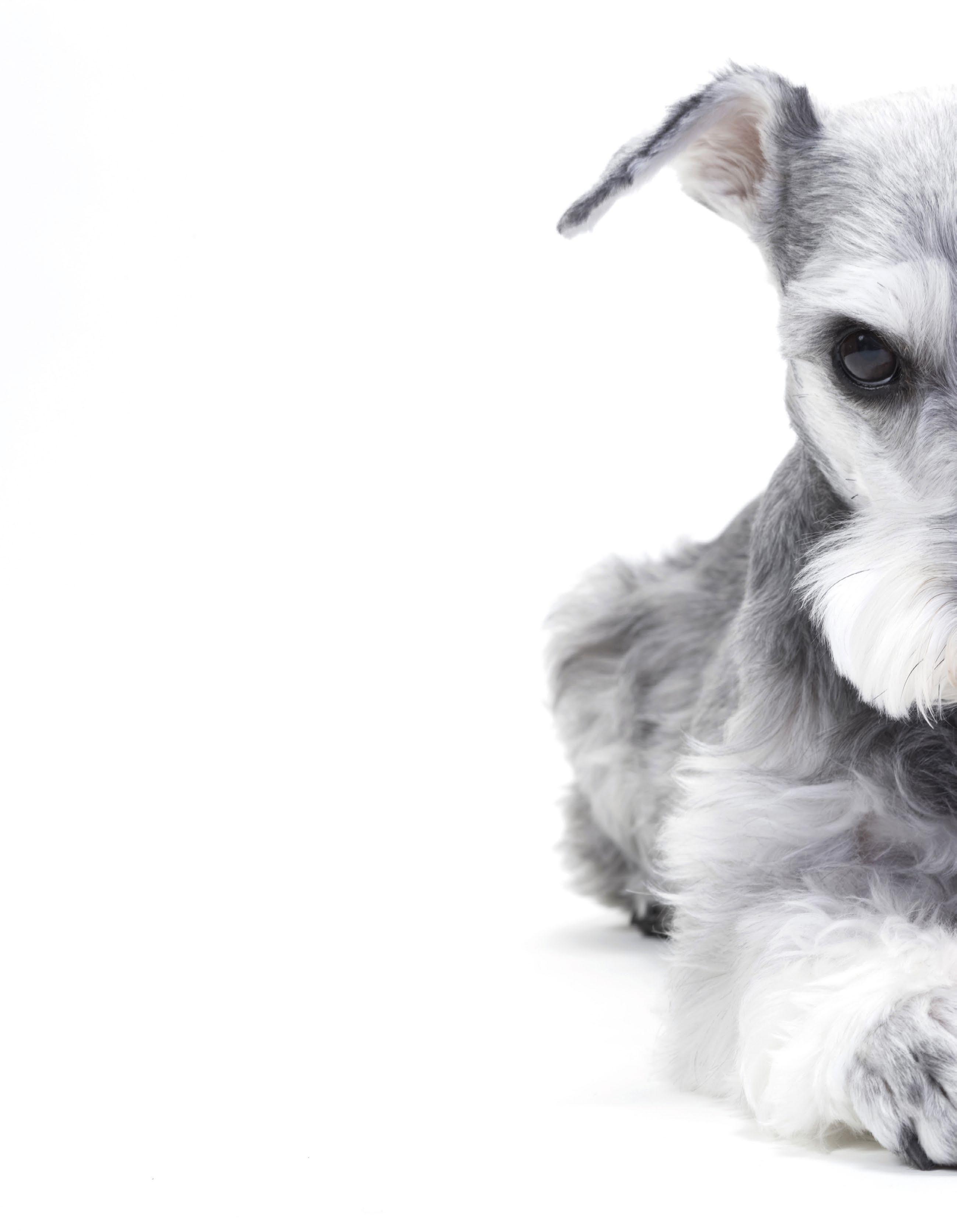Page 52 of Pet Lovers - Sorriso de saúde para seu animal de estimação Health Smile at our Pet