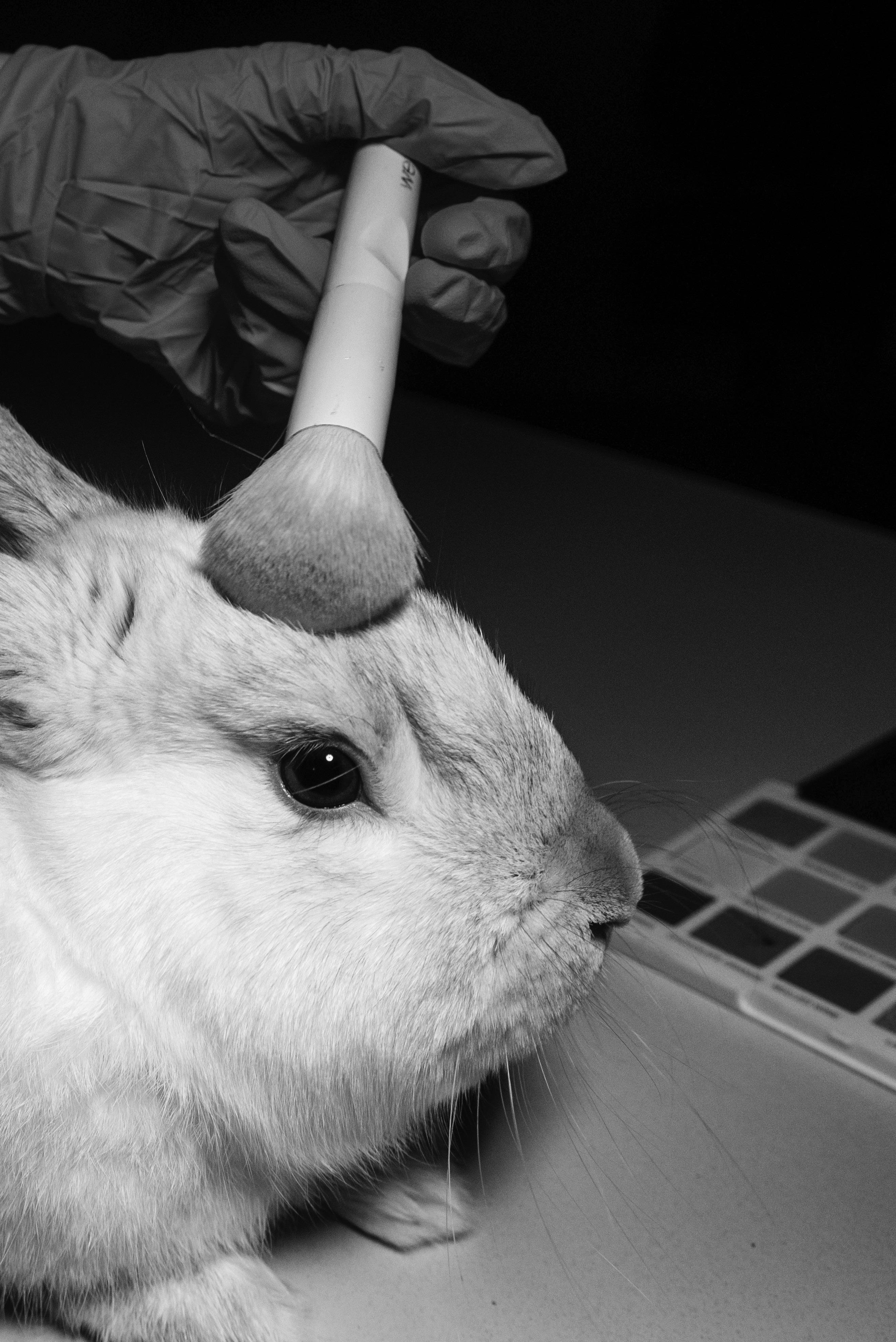 Page 32 of Unleashing the Truth Behind Animal Testing