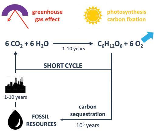 Page 20 of Novel Bio-Based Energy-Curable Polyurethane Dispersions Enhance Coating Sustainability