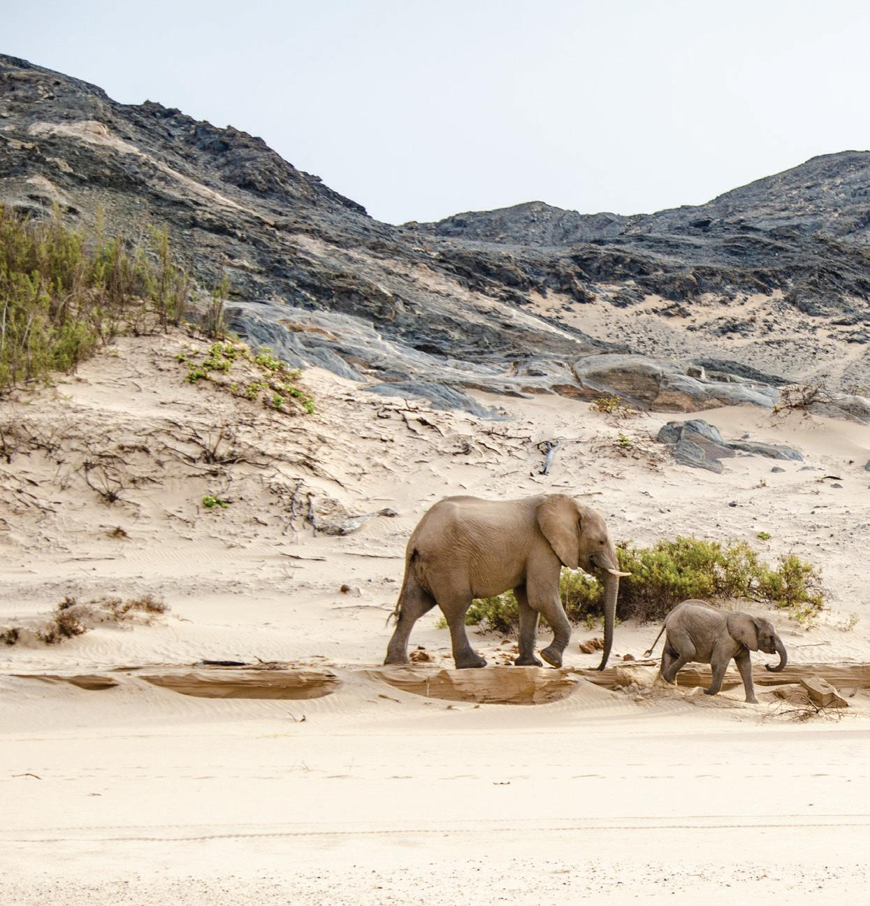Page 28 of IONA SKELETON COAST Africa's newest Transfrontier Park