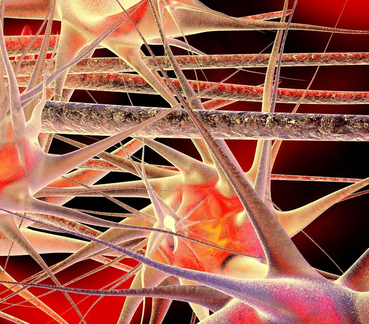 Page 36 of Ny kunskap om hur olika celltyper i hjärnan bidrar till planering av rörelser