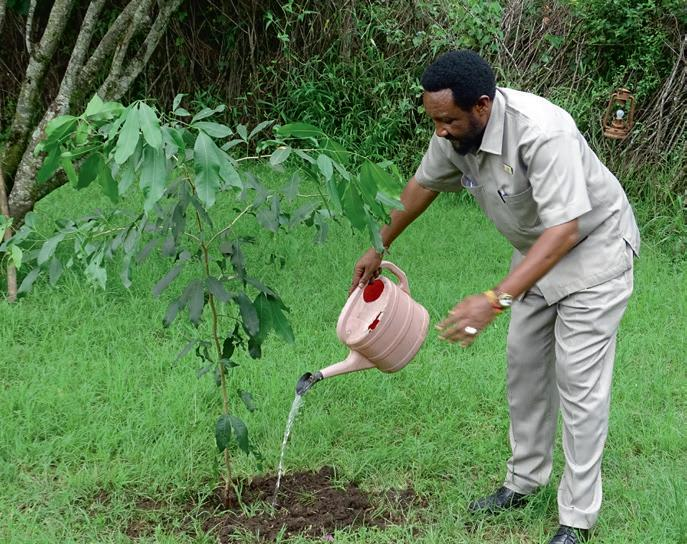 Page 16 of TREE PLANTING