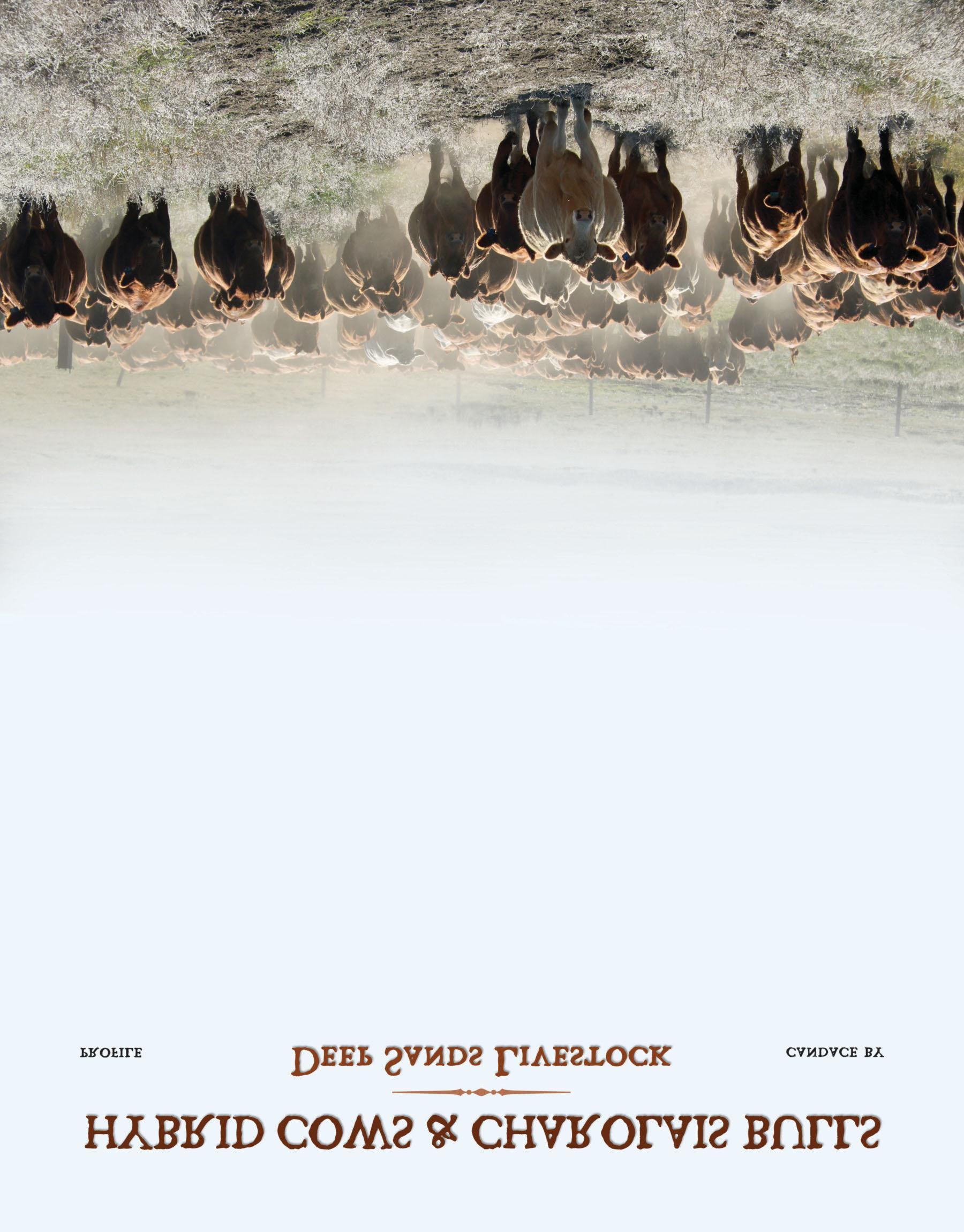 Page 16 of Profile – Deep Sands Livestock