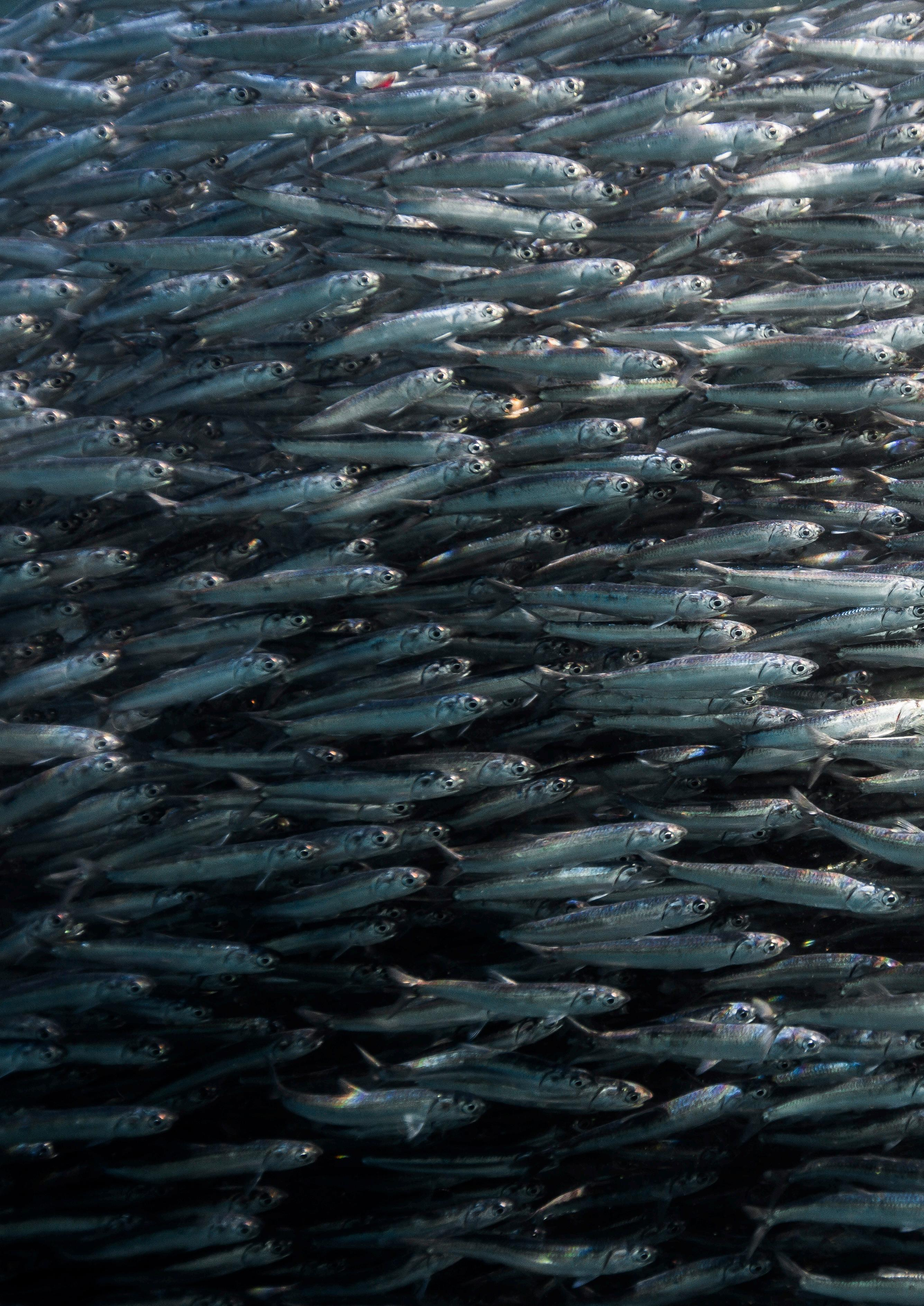 Page 78 of On the Wild Coast – Diving the Sardine Run