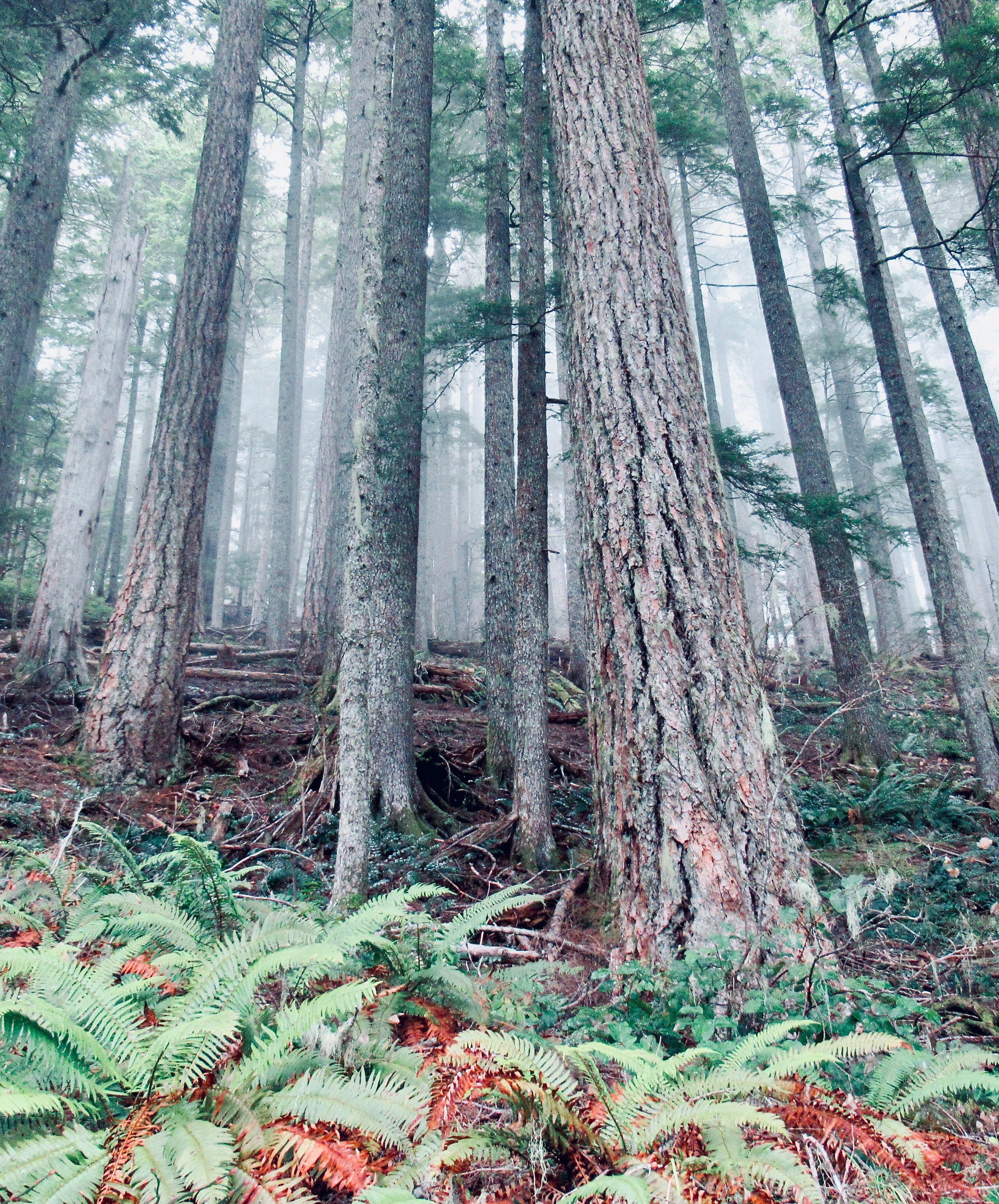 Page 22 of Big Creek Loop: A hike for all seasons & abilities