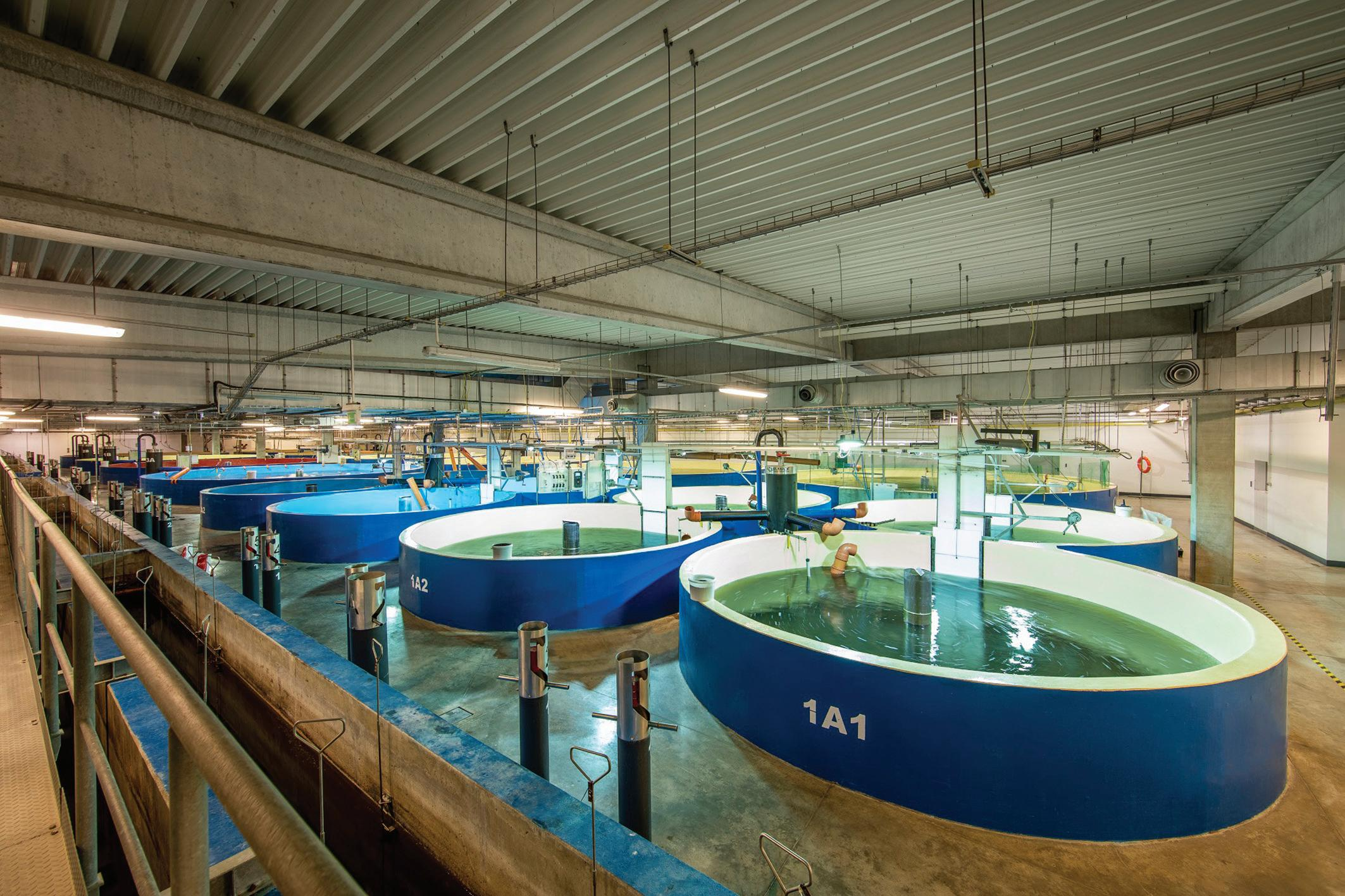 Page 20 of Dovetailing AquaMaof's technology and biology: Sustainable Atlantic salmon smolt production
