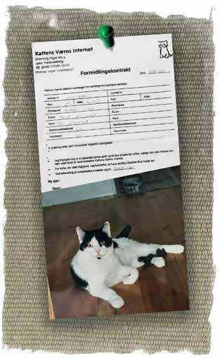 Page 16 of Et langt liv med katten Virus