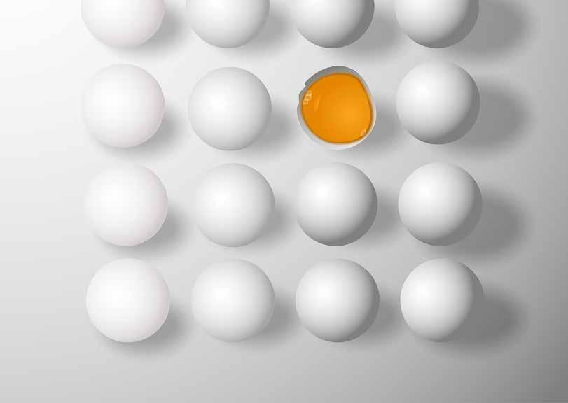 Page 5 of Instituto Ovos Brasil prevê aumento na produção de ovos em 2020