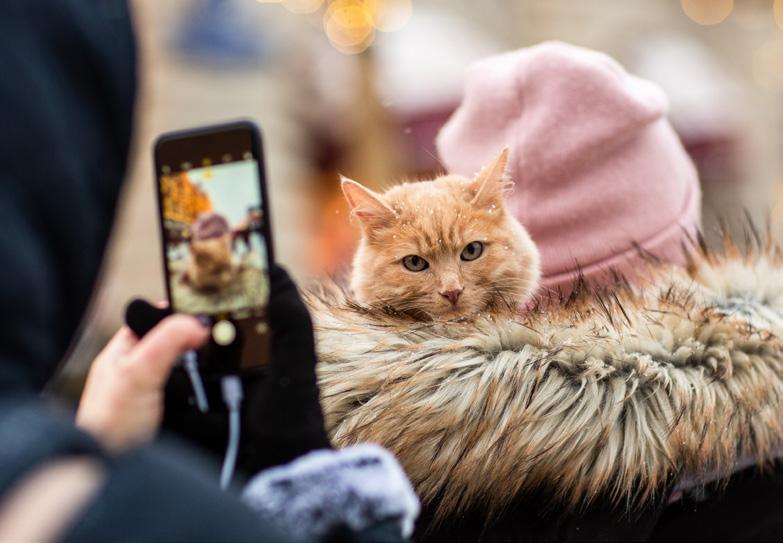 Page 38 of Is Your Pet the Next Social Media Star?