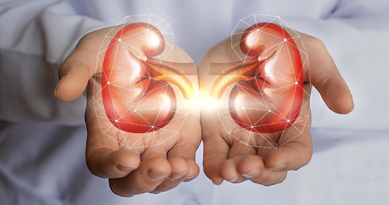 Page 20 of Cómo los riñones influyen en su presión arterial