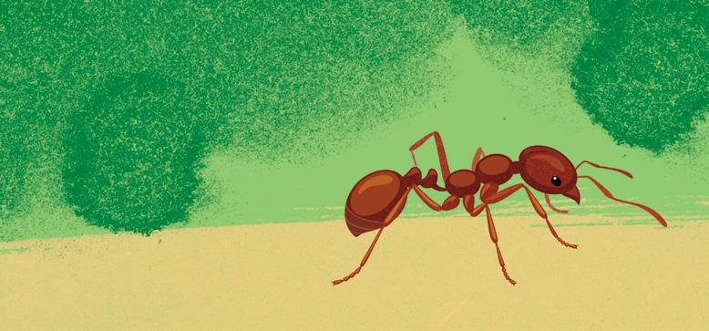 Page 46 of For the love of ants