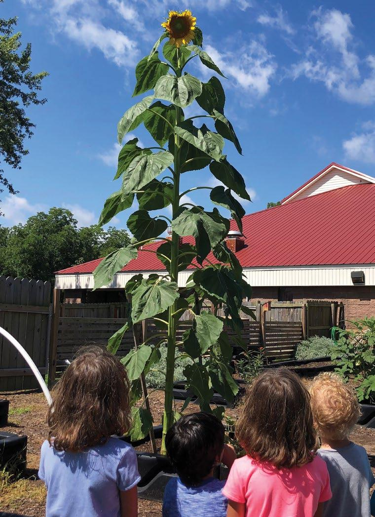 Page 56 of Farm to School: How Does Your Garden Grow?