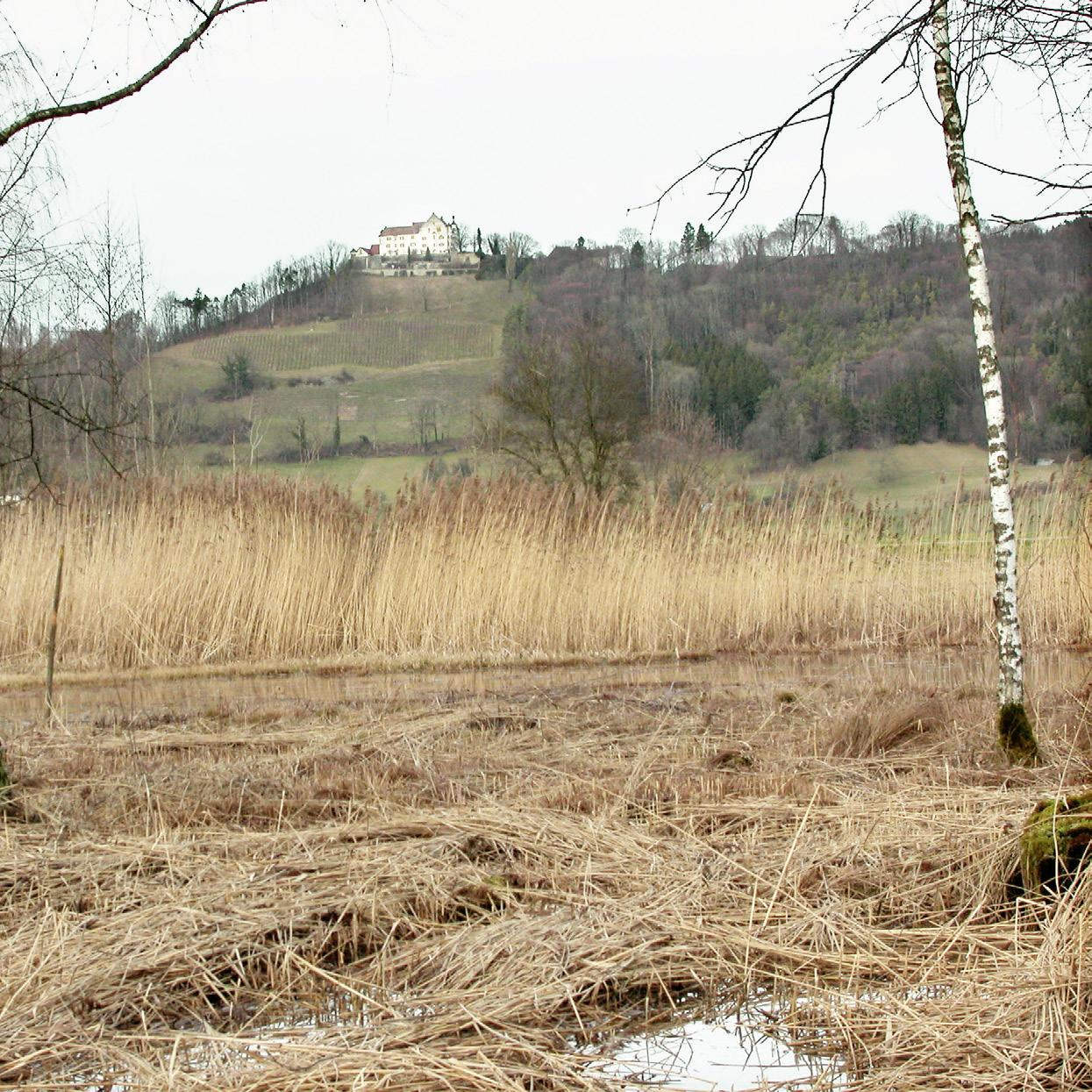 Page 48 of Aus dem Grütried droht ein Auenwald zu werden