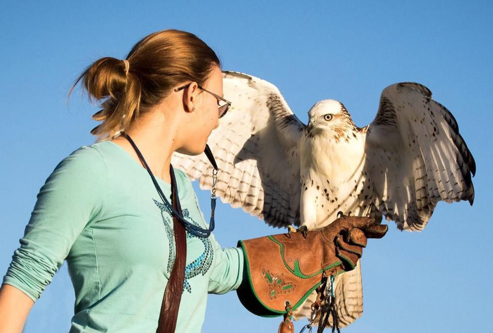 Page 7 of Whitehouse FFA Member Exhibits Passion for Falconry
