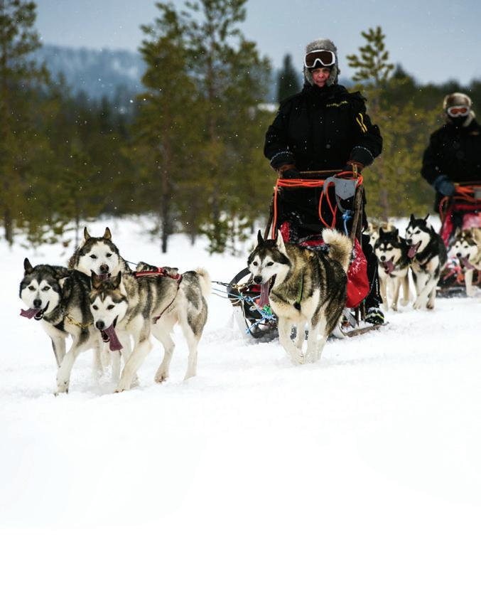 Page 82 of ELISA ELWIN reveals five reasons to visit Finnish Lapland, in the country's north, during the colder months LAPLAND WINTER WONDERLAND