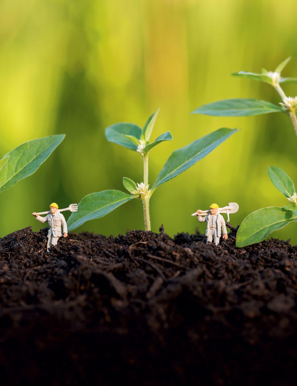 Page 18 of Happy Soil... Happy Plants