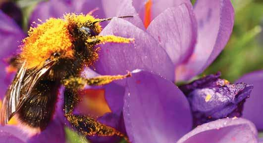 Read story: POLLINATING AND GERMINATING