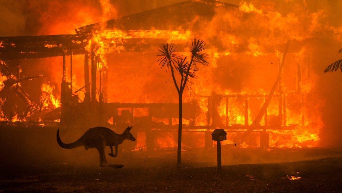 Page 14 of Összefoglaló az ausztráliai tűzvészről