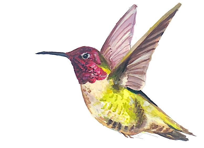 Page 22 of Campus Birds