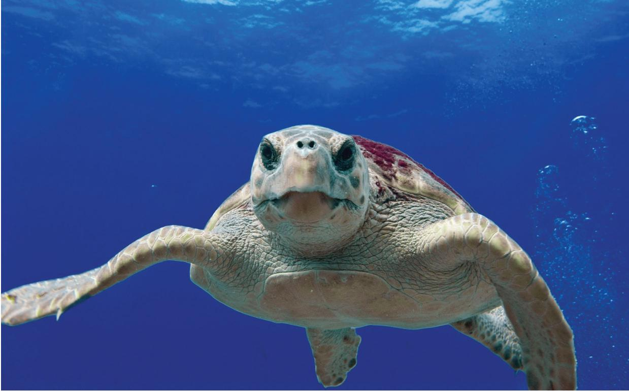 Page 30 of The Magnetic Map In Sea Turtles