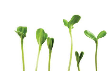 Read story: Growing Your Nutrition with Sprouts