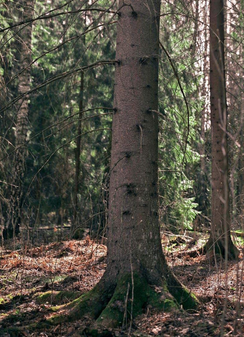 Page 12 of Laulaja Eetu Kalavainen haluaa pitää isoisän metsästä huolta
