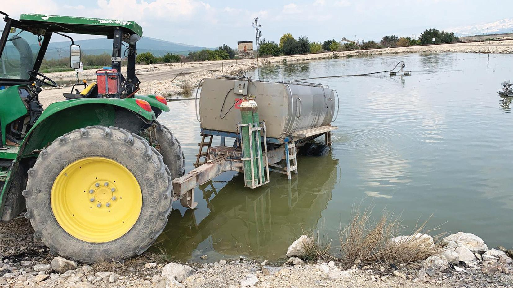 Page 34 of Field trial of a feed additive for juvenile hybrid tilapia used in a commercial farm during a natural outbreak of Tilapia Lake Virus (TiLV) in Israel