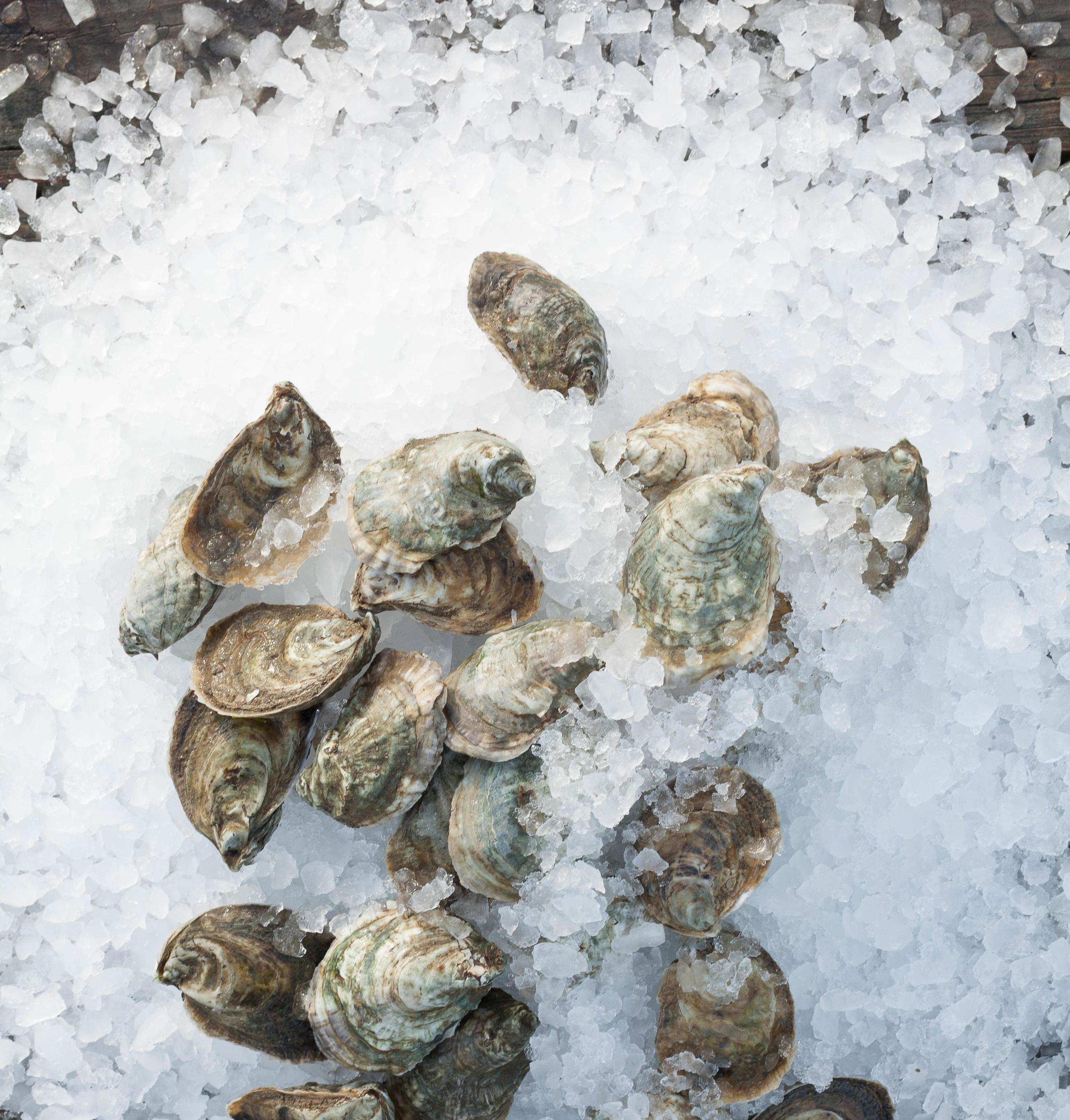 Page 10 of EAT // Shucking Delicious: How to Host an Oyster Roast at Home