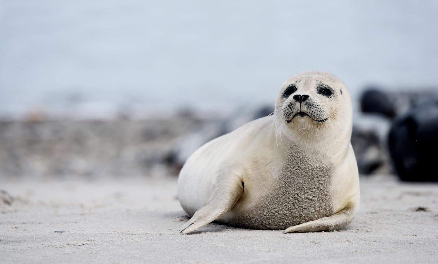 Page 36 of Nationalpark Vadehavets værdifyldte fortælling