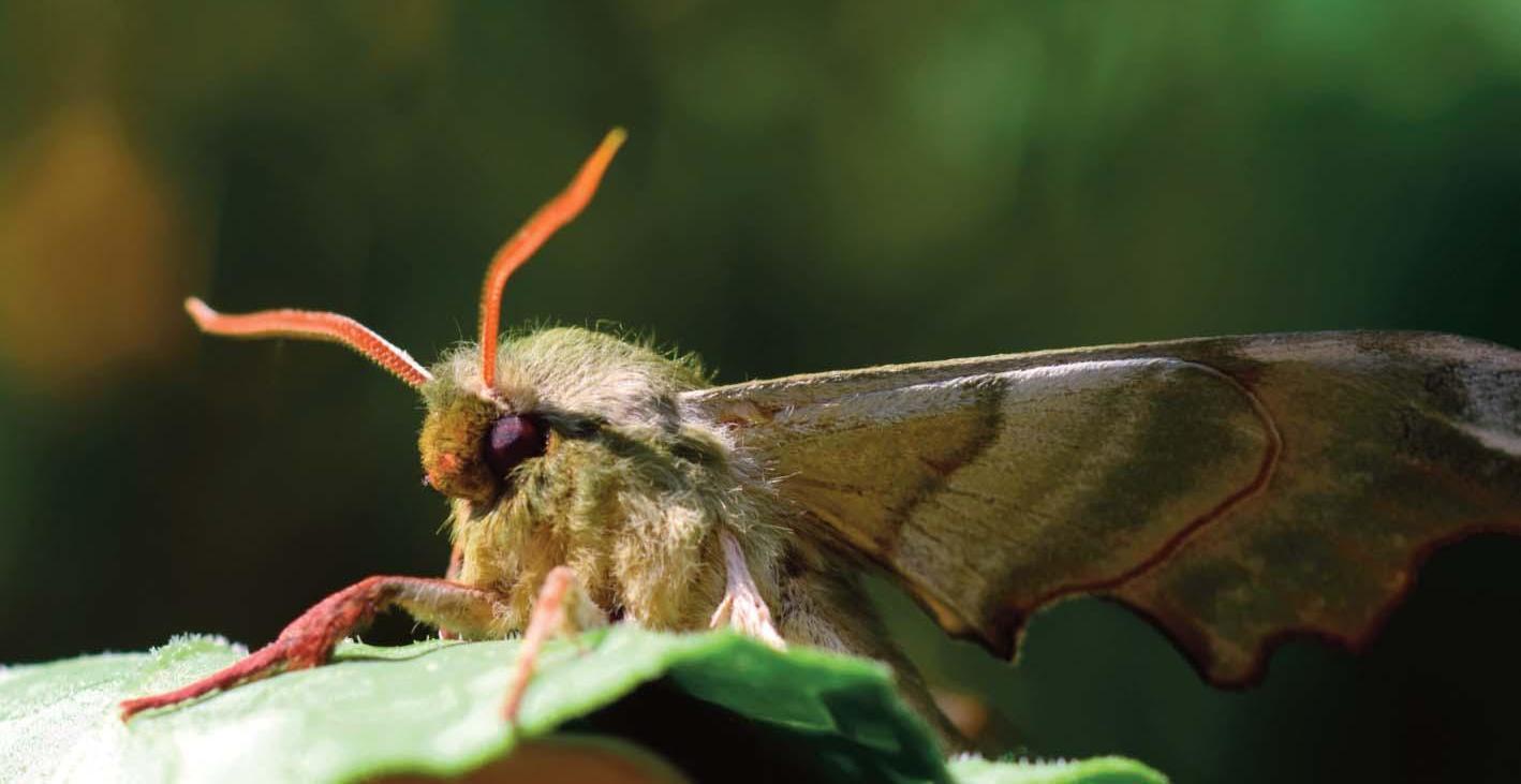 Page 21 of Invertebratenwerkgroep