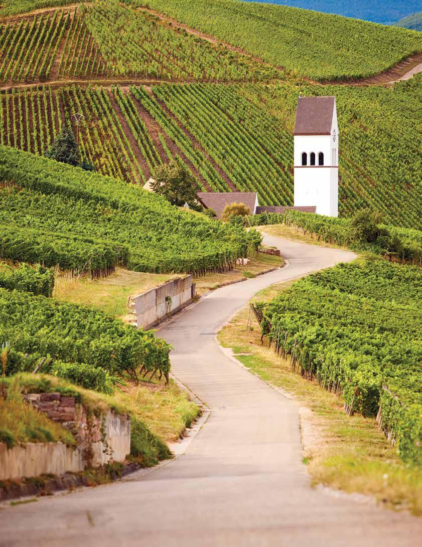 Page 30 of Chardonnay's Roots: From Burgundy to the New World