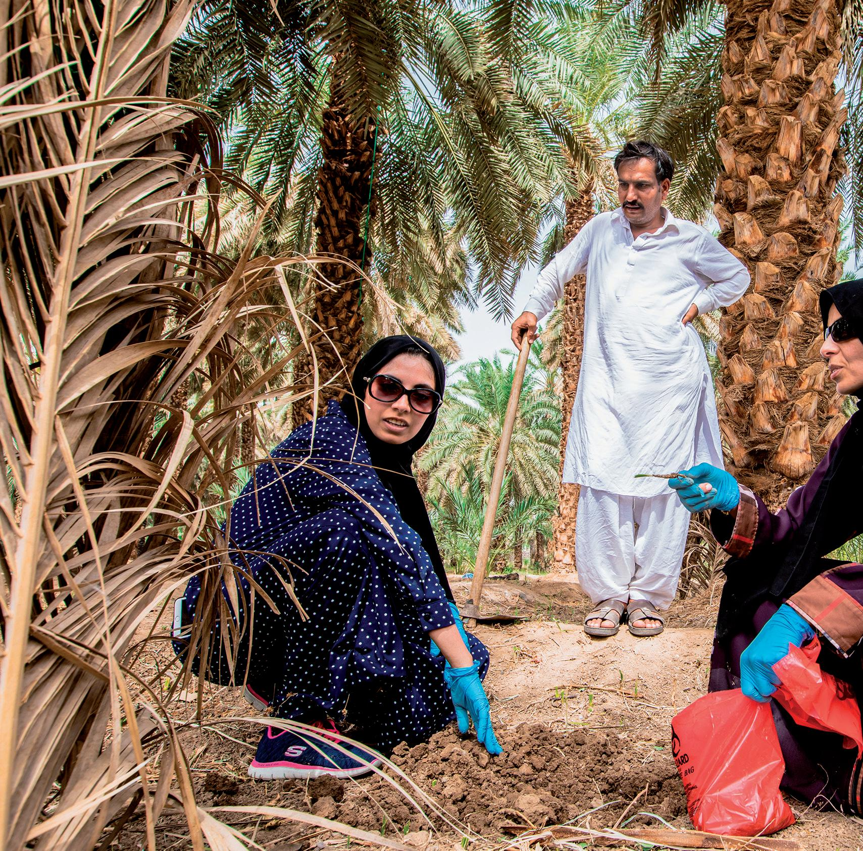 Page 14 of for Saudi Arabia's Flagship International Tourism Destination Boosting Global Date Fruit Production