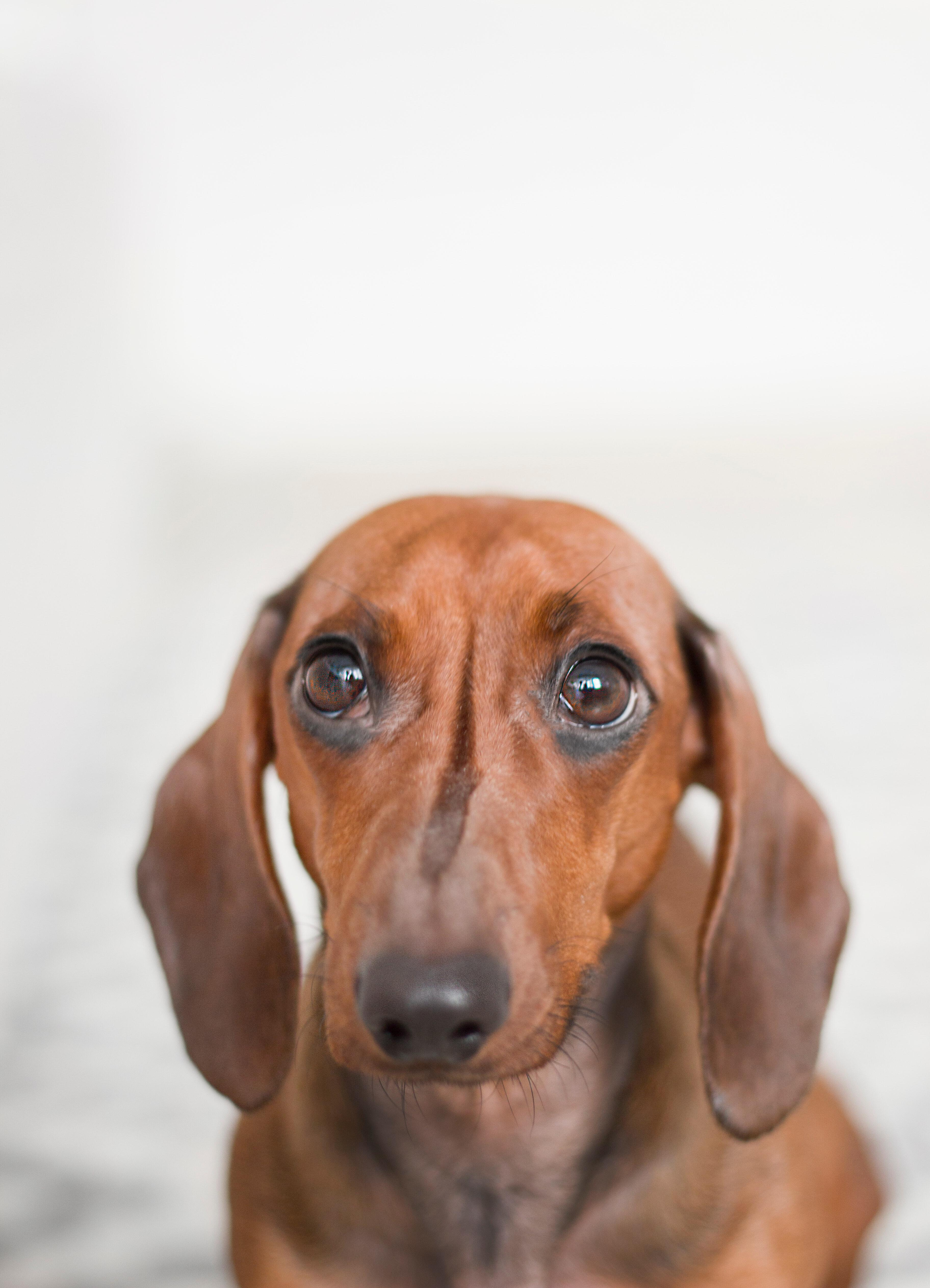 Page 34 of Separation Anxiety in Your Pup & How to Help