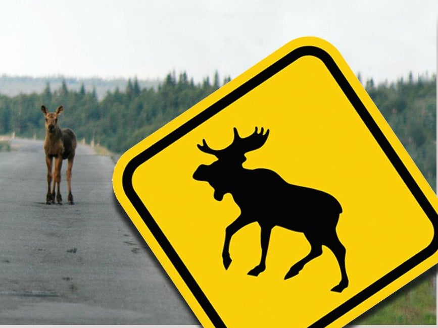 Page 48 of How to Avoid a Moose