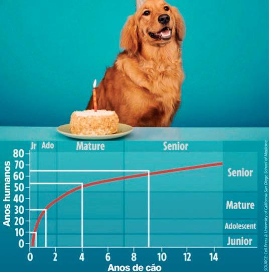 Page 28 of Você calculou a idade do seu cão ERRADO
