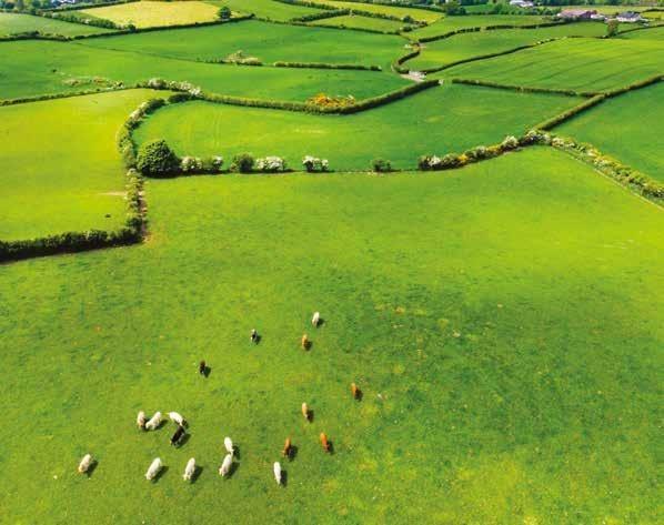 Page 42 of Produção leiteira irlandesa