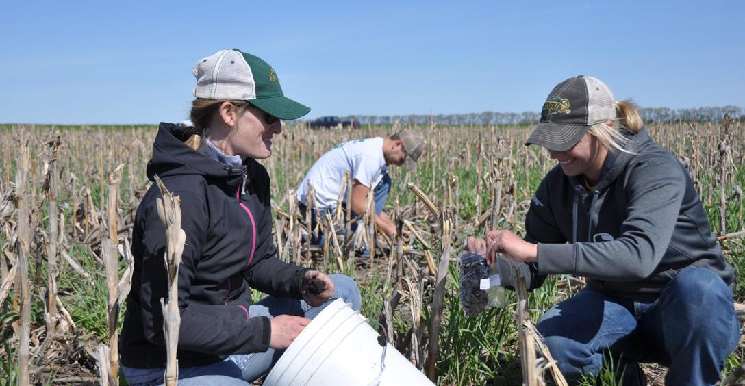 Page 5 of MANAGING SALINITY WITH COVER CROPS: A WHOLE SYSTEM RESPONSE