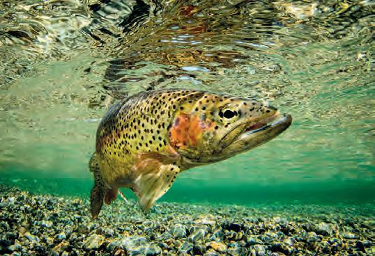 Page 128 of Fisch aus dem Lago Maggior e