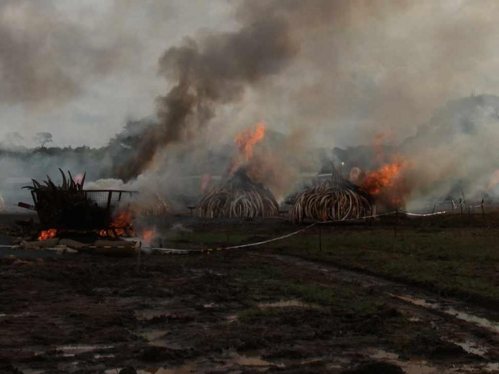 Page 58 of History's most extensive Ivory Burn