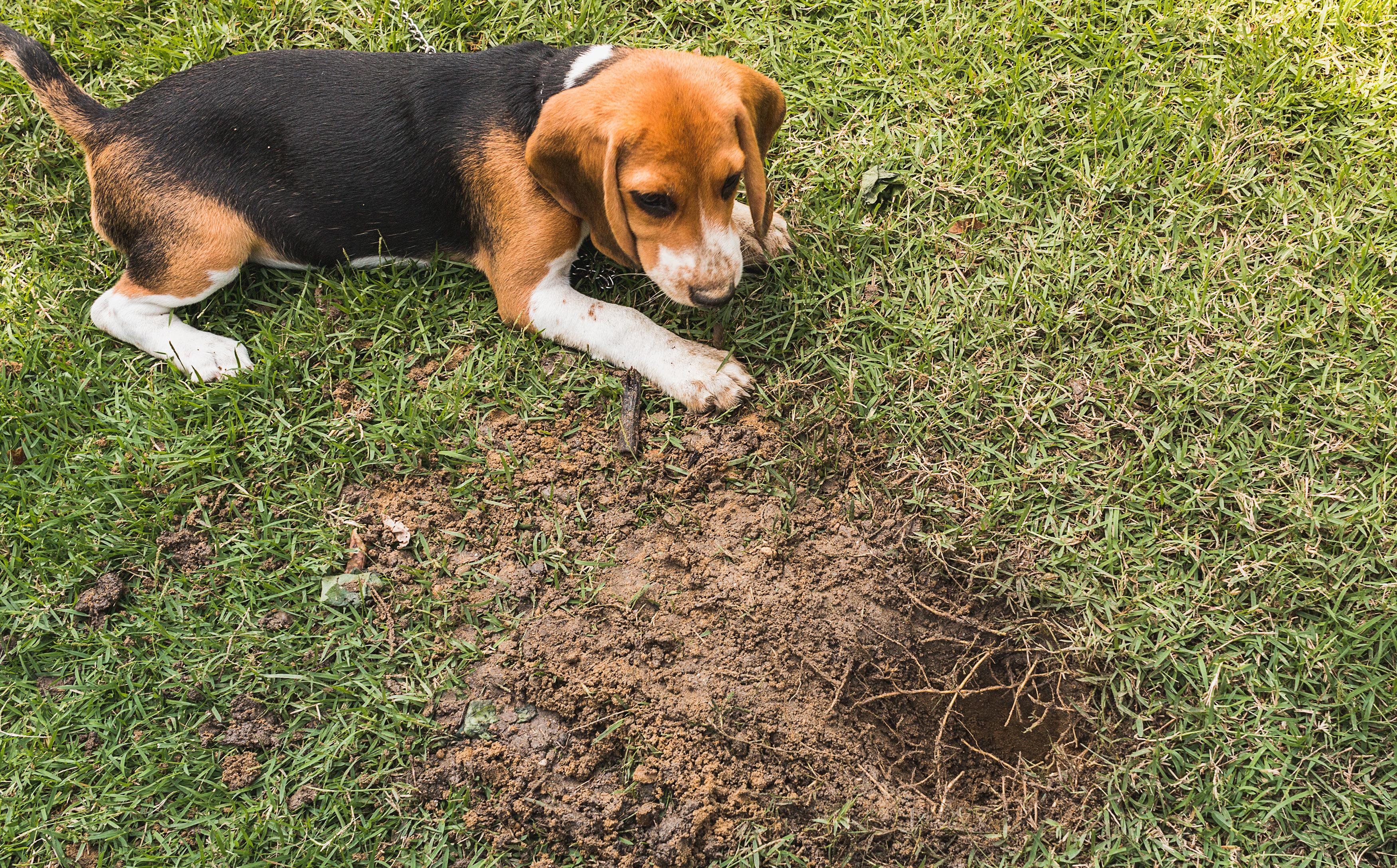 Page 24 of Simple Ways to Prevent Dog-Related Lawn Damage