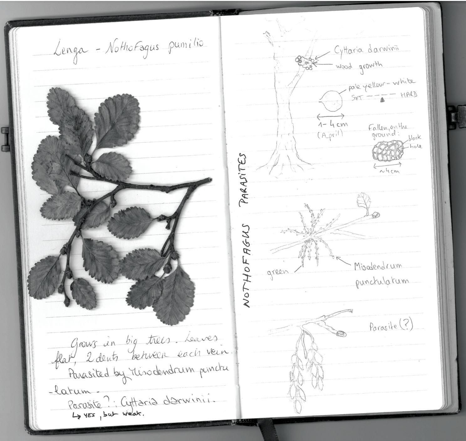 Page 29 of Why I Carry a Notebook Everywhere with Me – Words & Art Eva Sirantoine