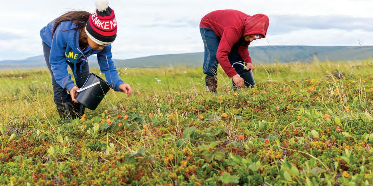 Page 18 of Indigenous Food Sovereignty in the Arctic