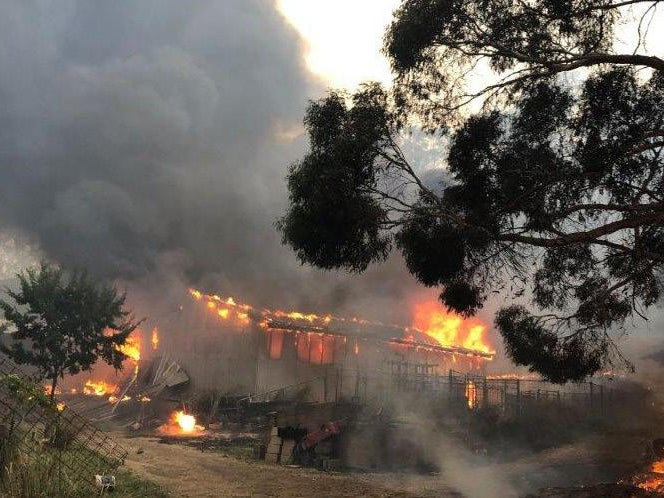 Page 8 of Scars run deep: the healing process in the aftermath of the bushfire disaster