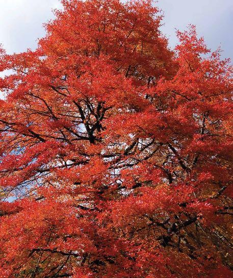 Page 26 of Fall is the Time to Plant Trees and Shrubs