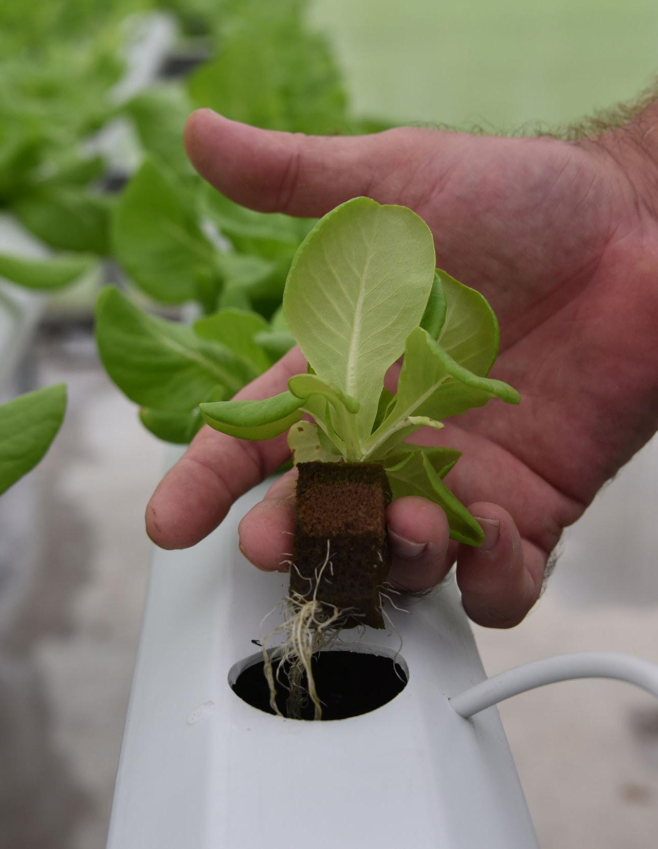 Page 28 of Hydroponics: Does it have a place in sustainable food systems?